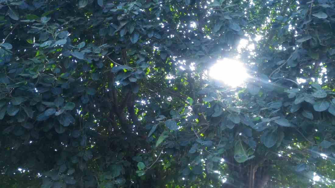 Light passing through trees